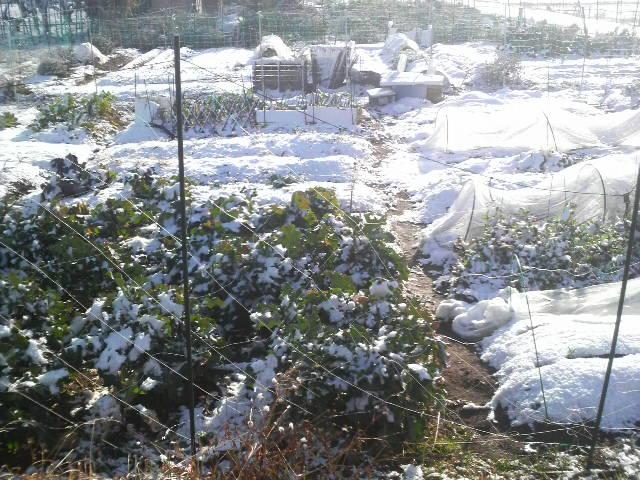 雪の日の畑