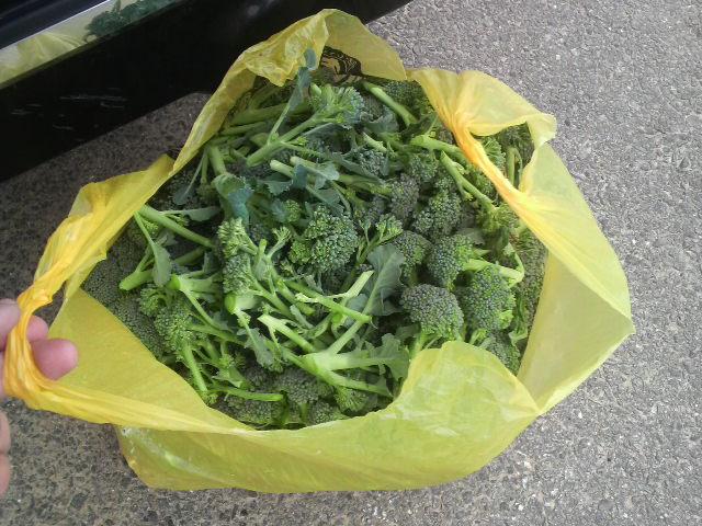 ドンキの袋いっぱい収穫したブロッコリー