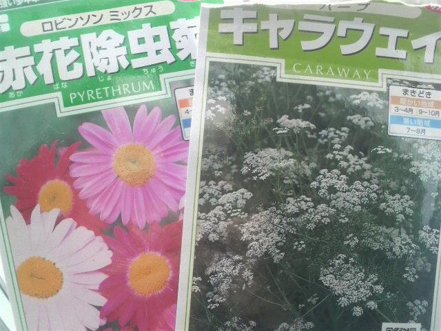 キャラウェイと除虫菊の種