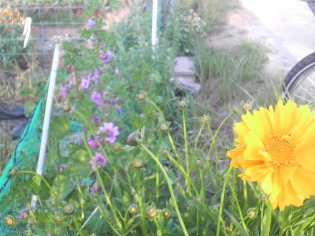 勝手に生えてきて咲いた花