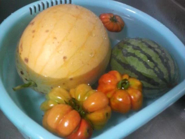 7月25日に収獲したスイカとトマト