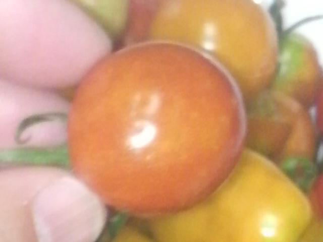キンカンの表面のような細かい穴の開いたトマト