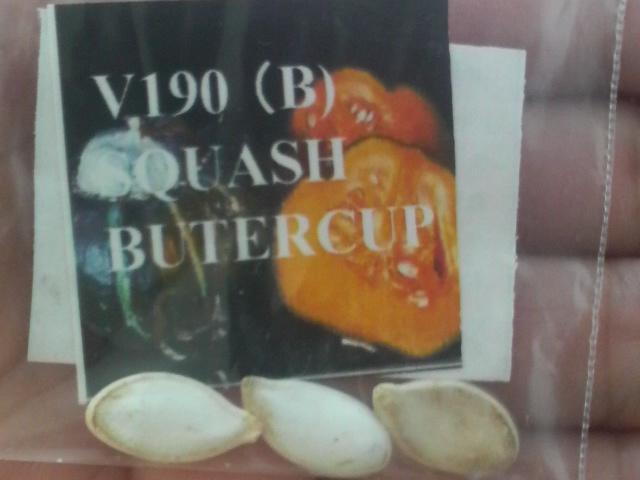 バターカップスカッシュの種
