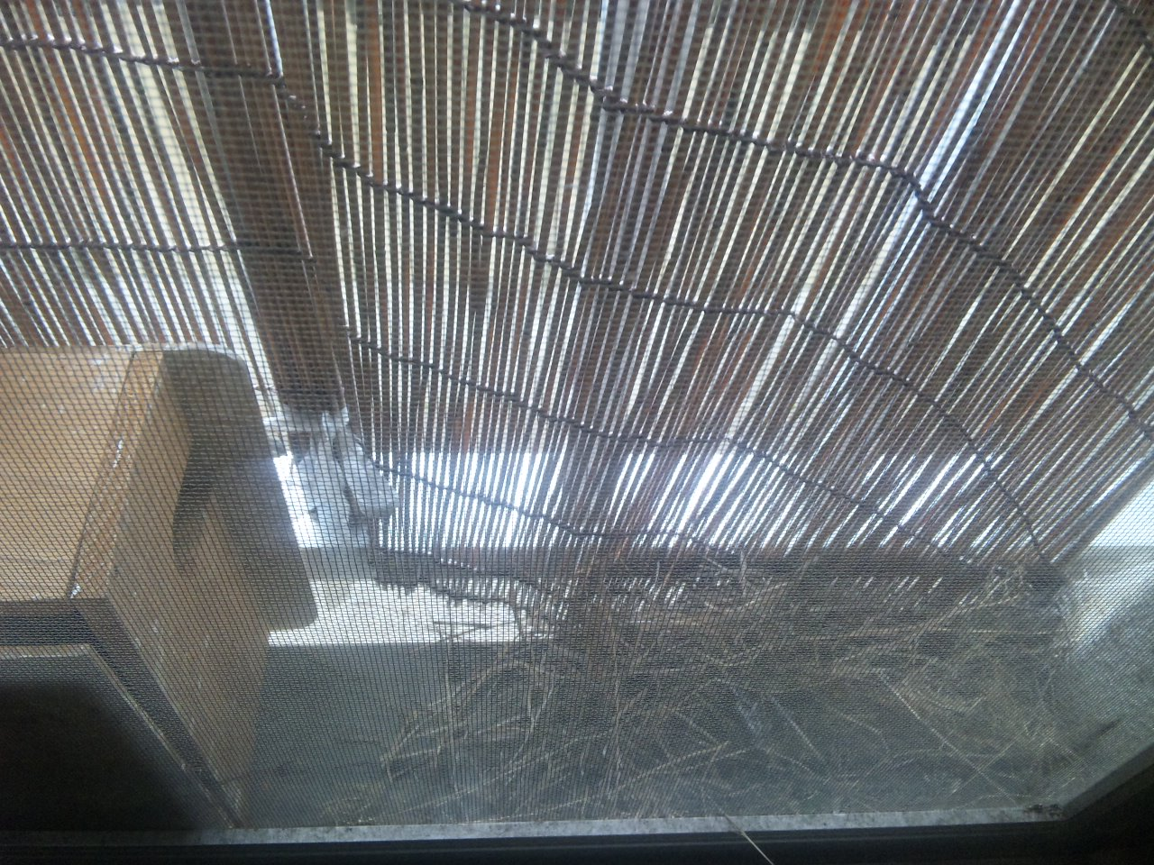 裏の窓と柵の間にも沢山の草、そして巣箱も置いてみた。