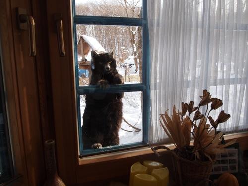 外ネコマミちゃん、家の中を覗く