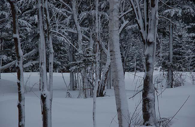 4.14ずっと吹雪き (16)