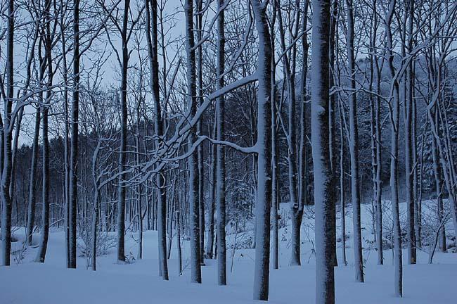 4.1520センチ積雪 (3)