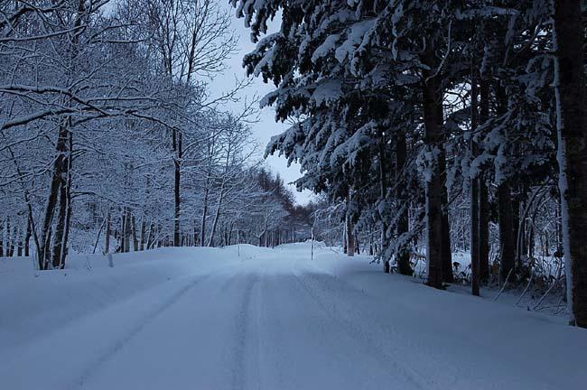 4.1520センチ積雪 (4)