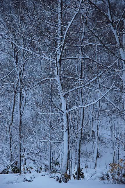 4.1520センチ積雪 (5)