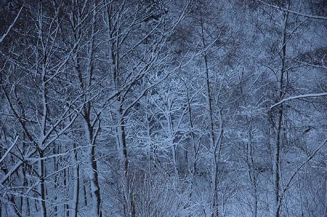 4.1520センチ積雪 (6)