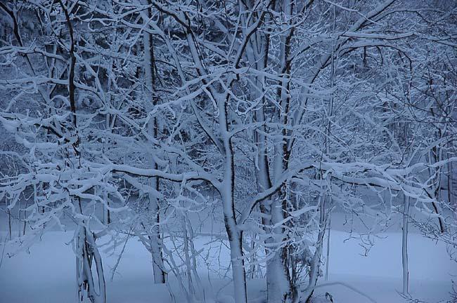 4.1520センチ積雪 (10)