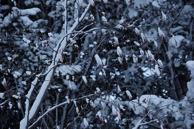 4.1520センチ積雪 (11)