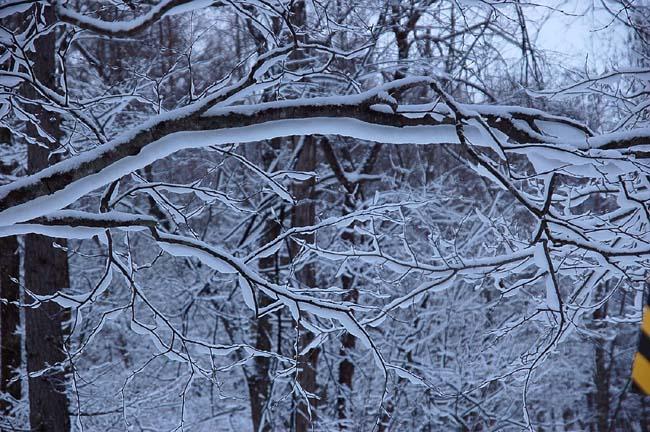 4.1520センチ積雪 (12)