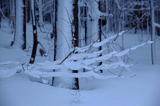 4.1520センチ積雪 (17)