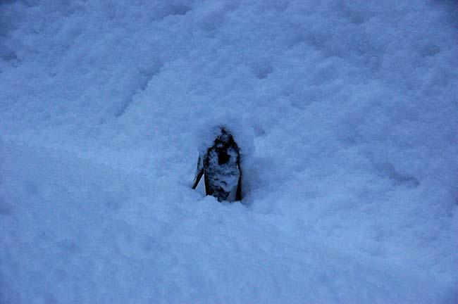 4.1520センチ積雪 (18)