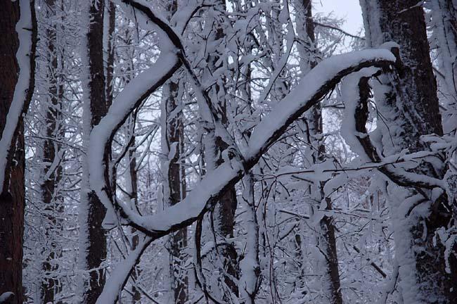 4.1520センチ積雪 (20)