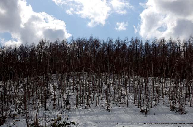 4.1520センチ積雪 (34)
