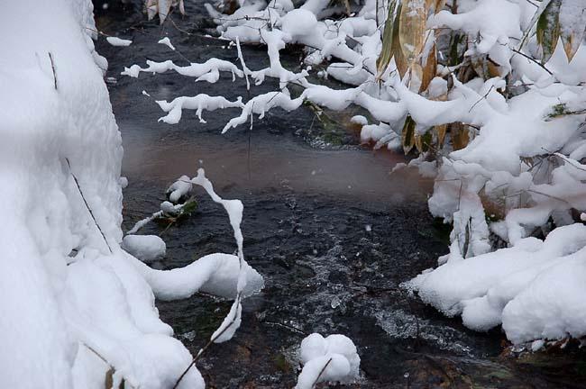 4.1520センチ積雪 (29)
