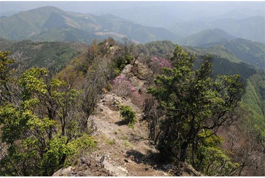 稜線の登山道