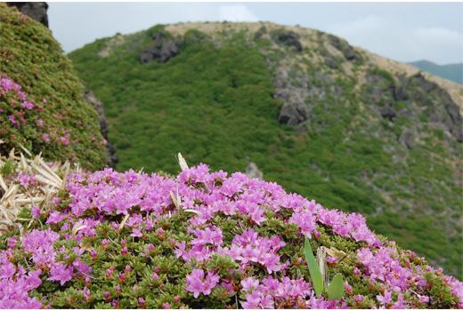 ミヤマキリシマと三俣山北峰