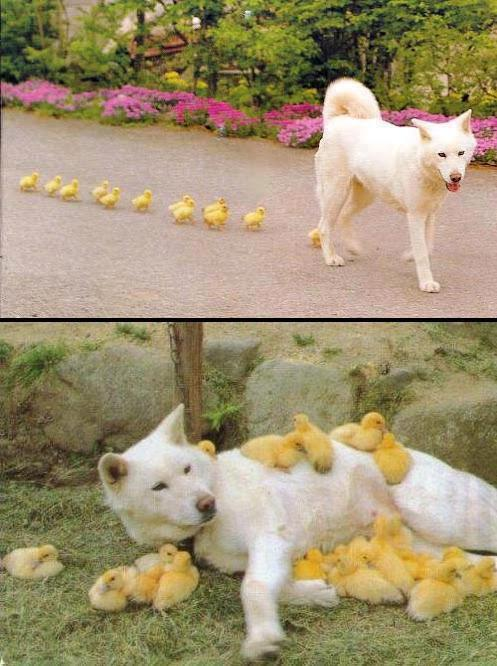 dog'n'chicks