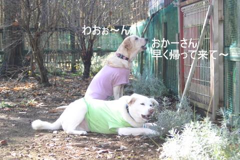 ひばりの森0004