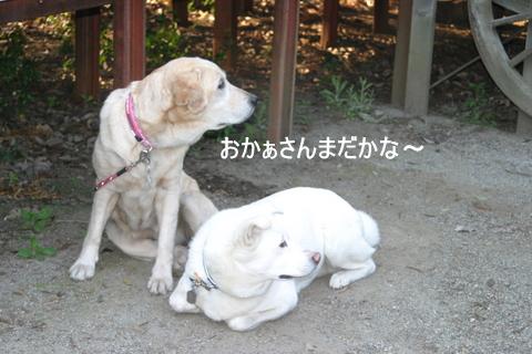 ひばりの森0065