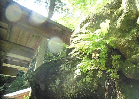 岩とシダ植物とオーブ
