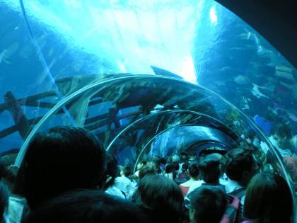 シンガポール2013.3アクアリウムトンネル