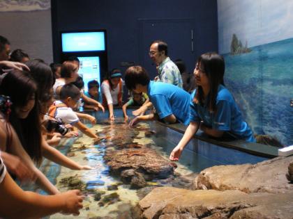シンガポール2013.3アクアリウムタッチ水槽