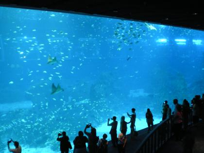 シンガポール2013.3アクアリウム大水槽2