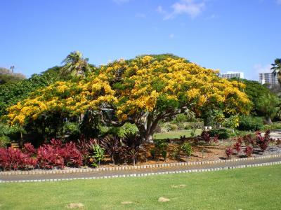 ハワイ2012.7・5日目散策(公園)