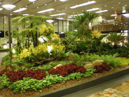 シンガポール2013.3チャンギ空港植栽2