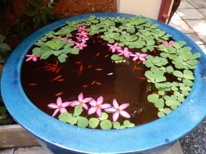 バンコク2013.5ジムトンプソン家水鉢2