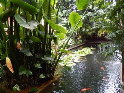 バンコク2013.5ジムトンプソン家の池