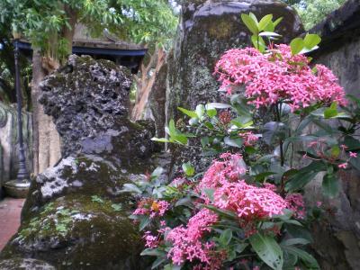 台湾2012.8林家庭園の花