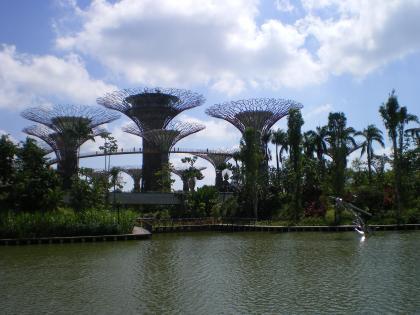 シンガポール2013.1スーパーツリー遠景