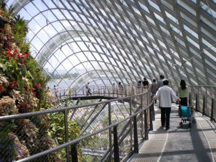 シンガポール2013.1クラウドフォレストクラウドウォーク1