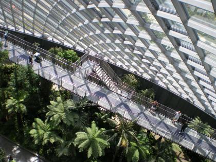 シンガポール2013.1クラウドフォレストクラウドウォークからツリートップウォーク1
