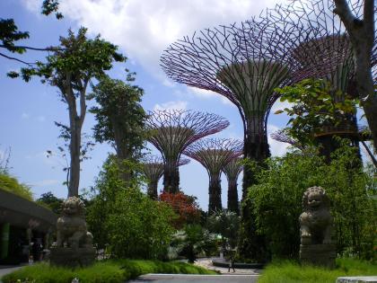 シンガポール2013.1スーパーツリー1