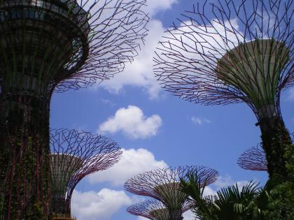 シンガポール2013.1スーパーツリー下から
