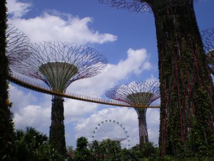 シンガポール2013.1スカイウォークを下から