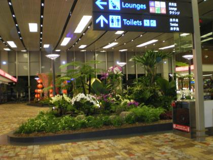 シンガポール2013.1チャンギ空港第1ターミナル植栽1