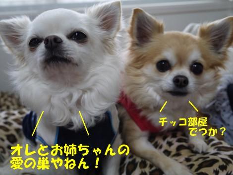 blogP1020443.jpg