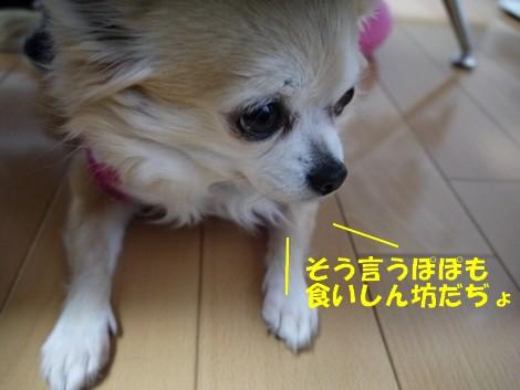 gfP1020325.jpg