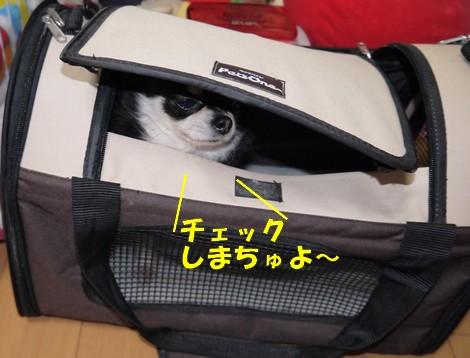 gfP1020666.jpg