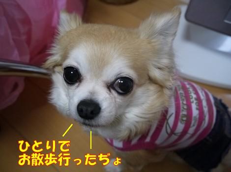 gfP1020946.jpg