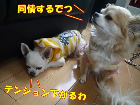 gfP1030247.jpg