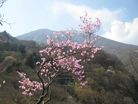 irohazaka110508-104