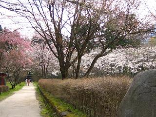 nakimusiyama100502-250